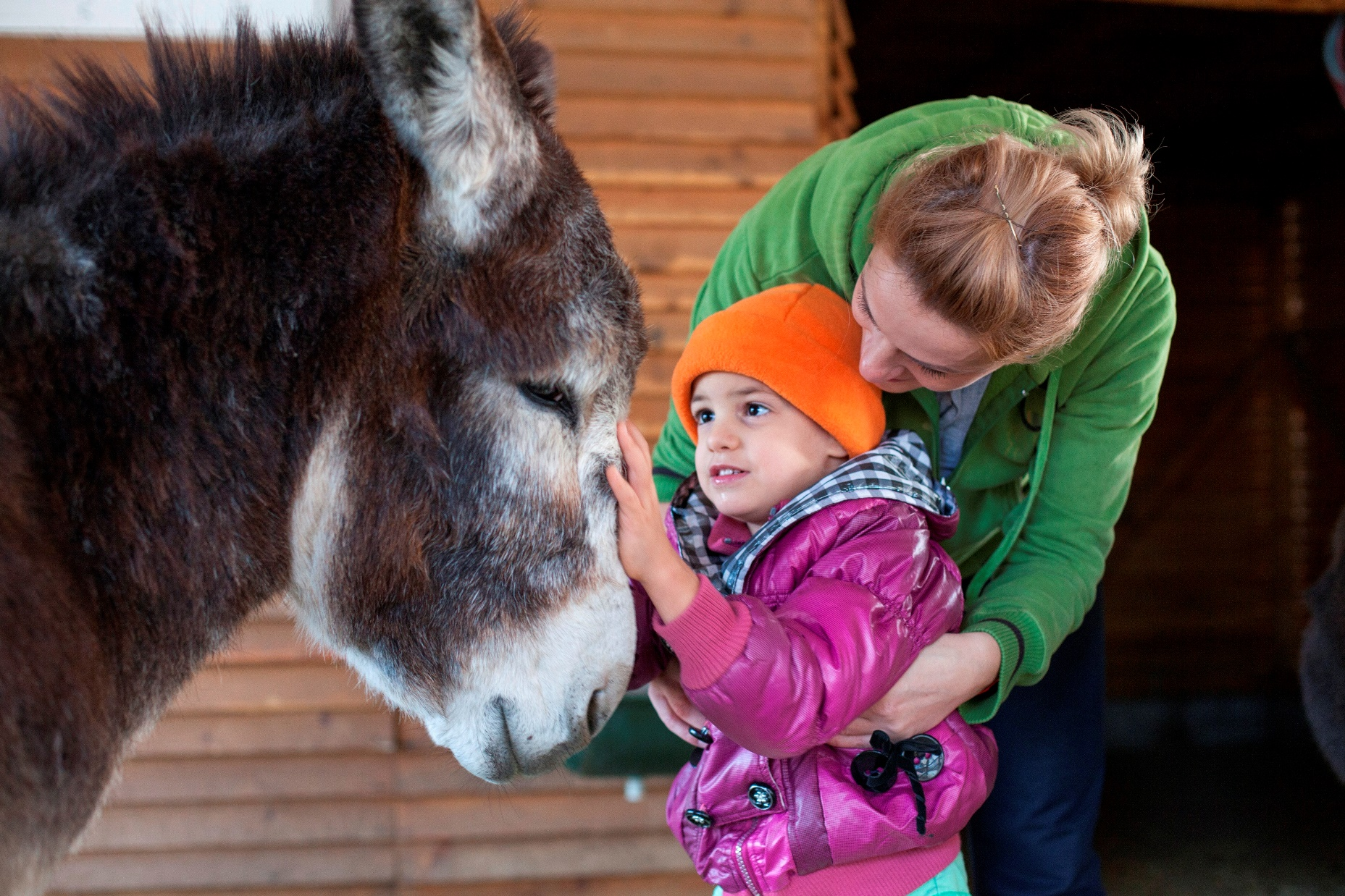 Donkey-assisted therapy, Romania