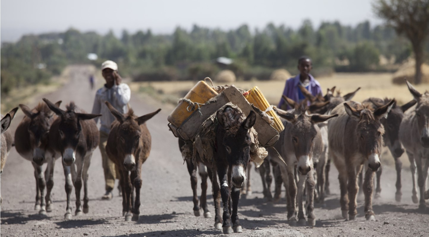 donkey herd with water and men