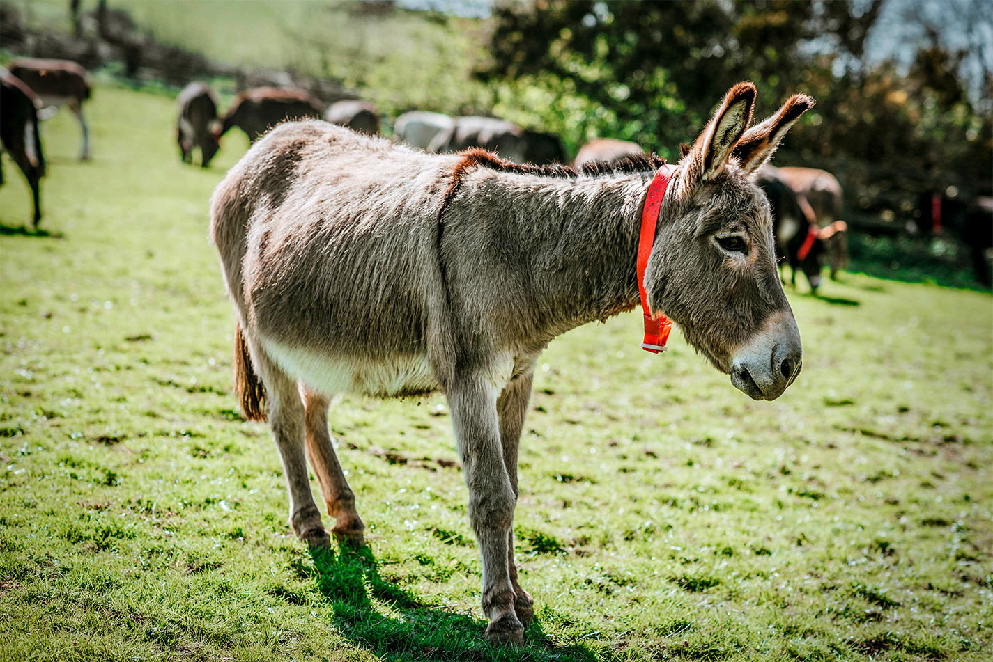 Advice And Support For Donkey Owners The Donkey Sanctuary