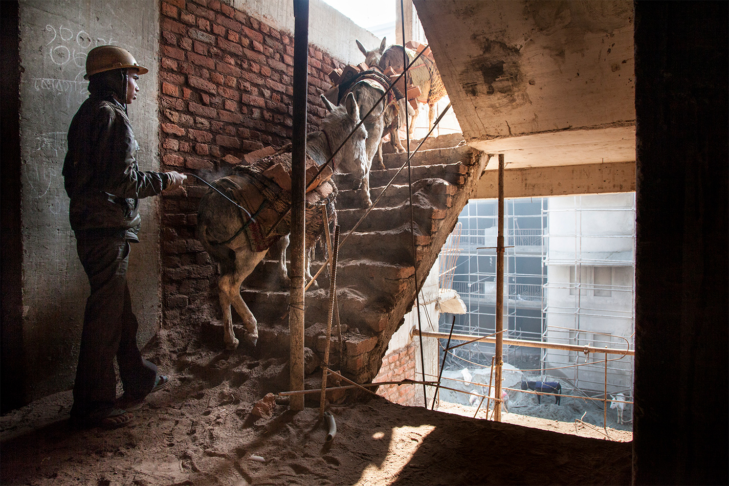 Donkeys working on construction sites in India