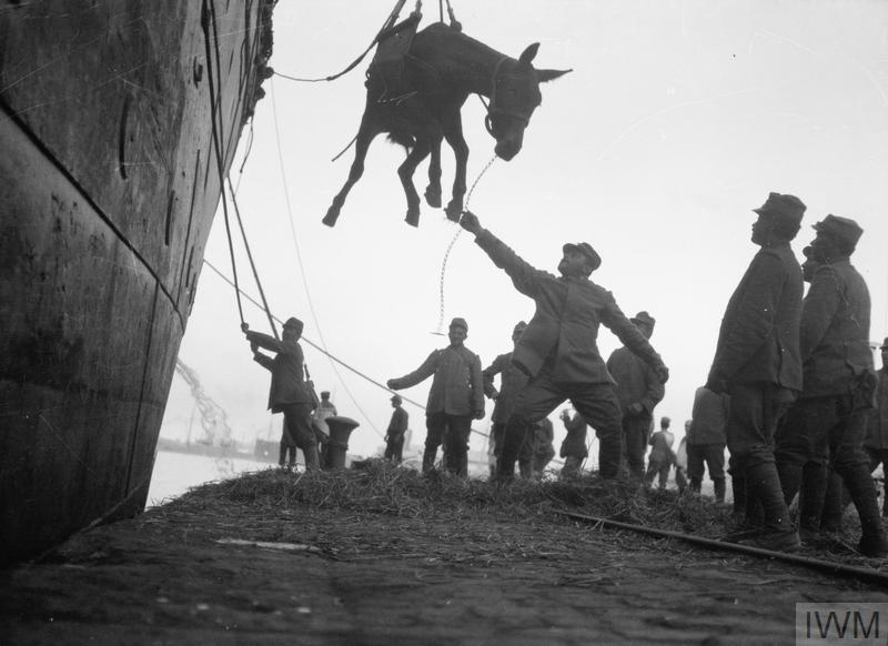 Italians unloading a mule from a ship at Salonika.