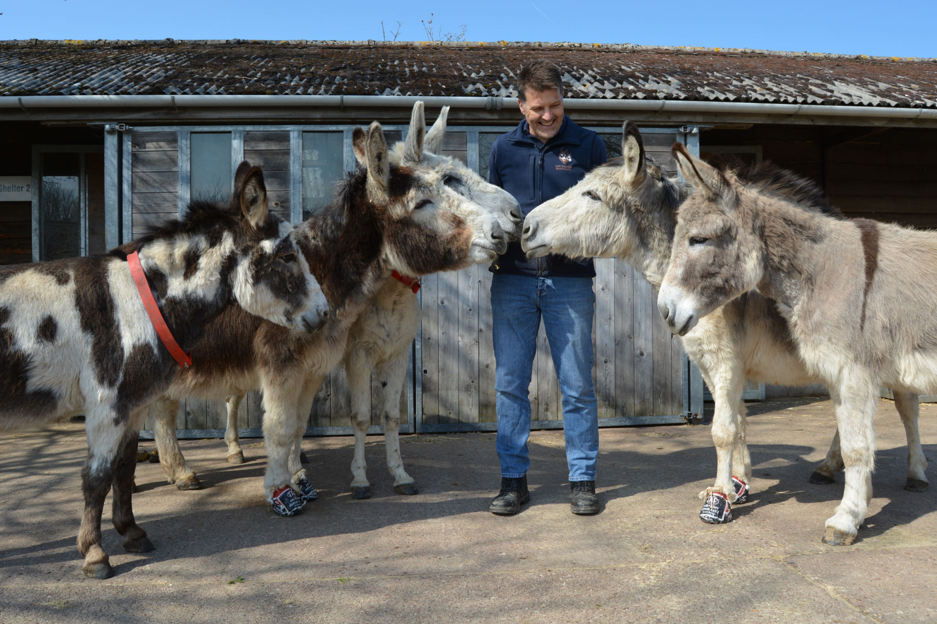 Ben Hart with Blackpool donkeys in Sidmouth