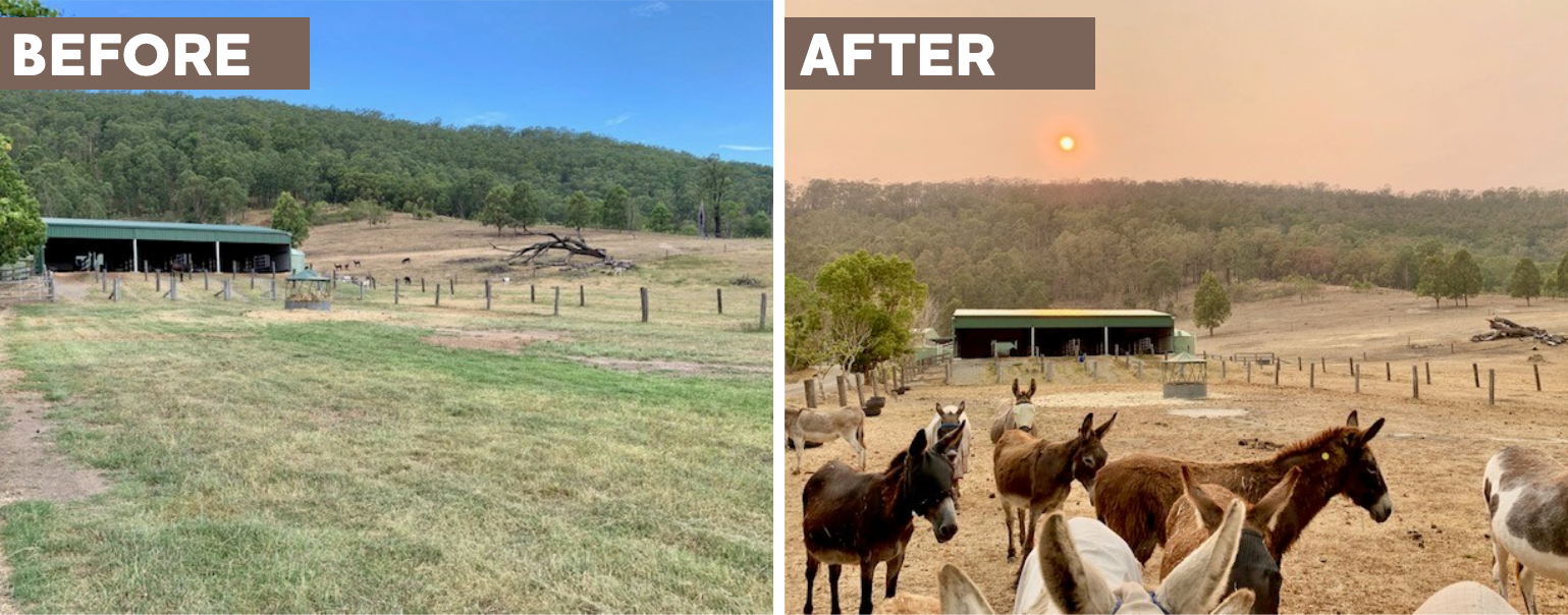 Good Samaritan Donkey Sanctuary - drought images before and after
