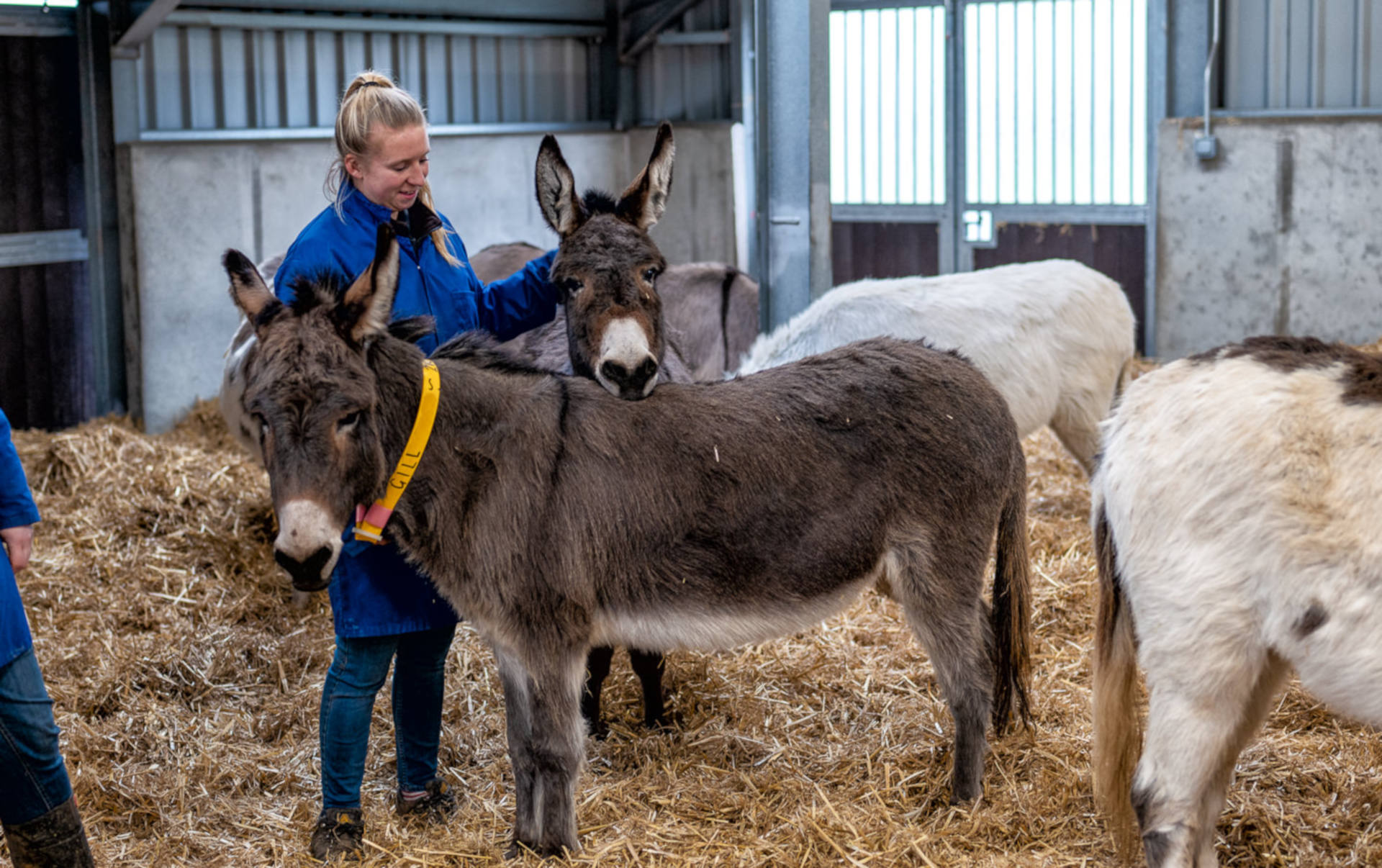 Donkeys at the Rehoming Unit growing in confidence