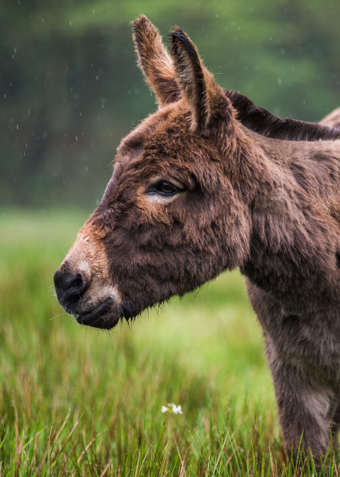Adopt a Donkey | The D...