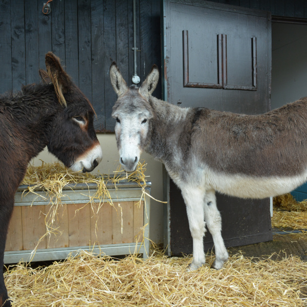 What to feed your donkeys