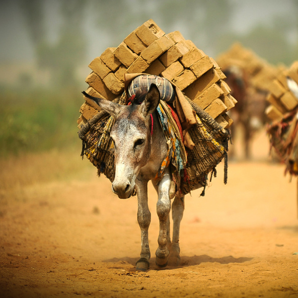 Helping working donkeys in industry | The Donkey Sanctuary