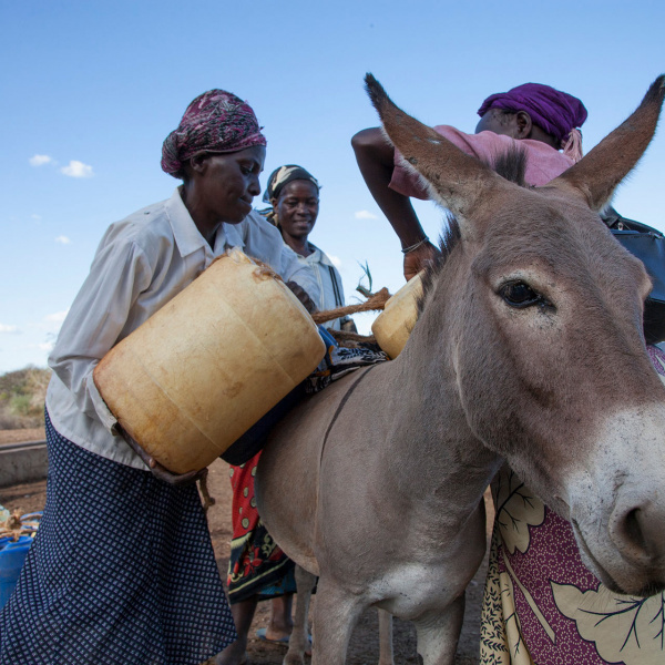 Women load water panniers onto donkey's back