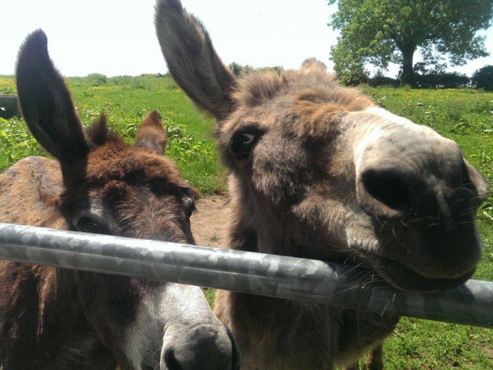 Rescued donkeys Sue and Rita