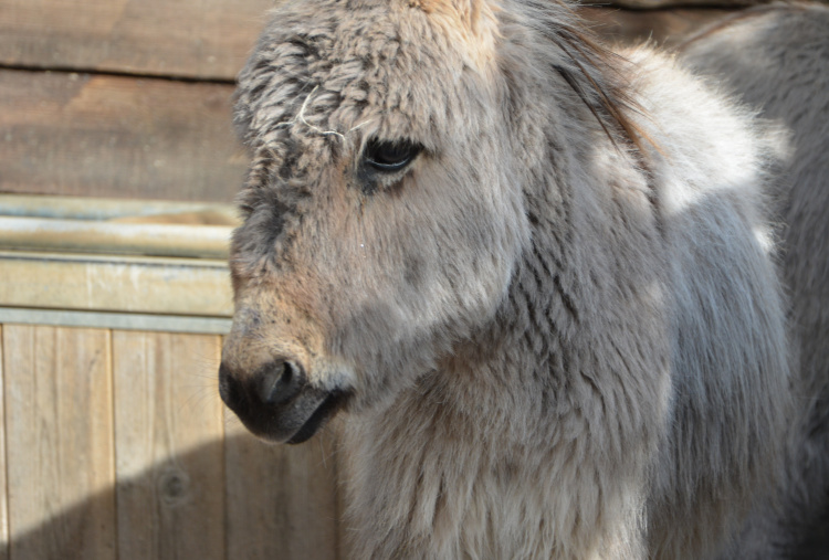 A new home for this donkey foal