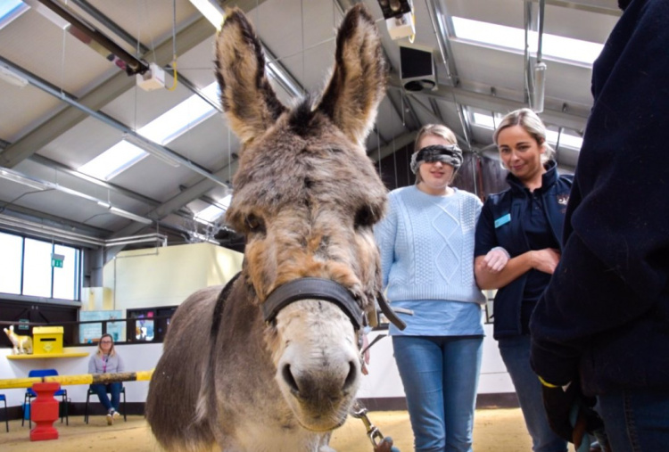 Leighann benefiting from donkey-assisted therapy