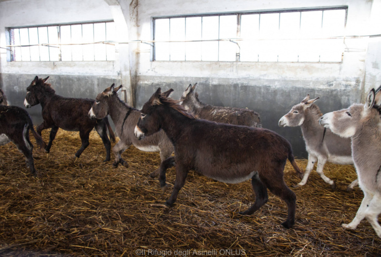 Rescue donkeys running at Italian holding base