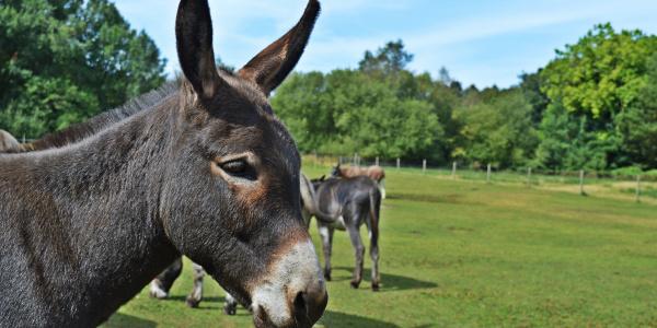 Visit us - Birmingham | The Donkey Sanctuary