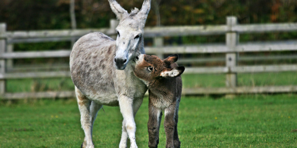 Caring for mares and foals