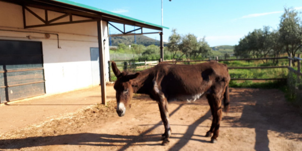 Anastasia settling in at our sanctuary in Spain