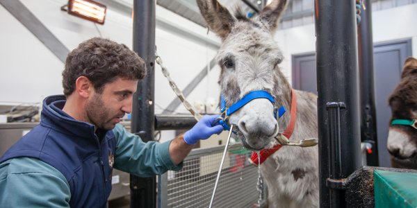 Equine dentist rasping teeth at Brookfield