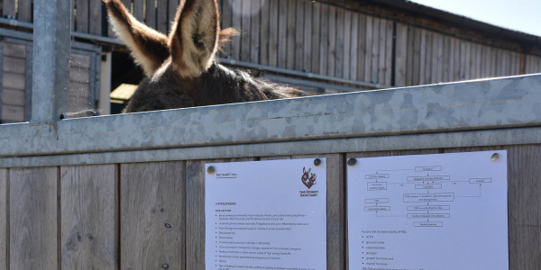 Factsheet with donkey ears
