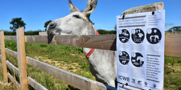 Biosecurity poster with donkey