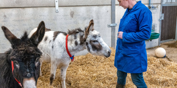 Curious donkeys at the Rehoming Unit