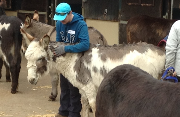 Donkey-assisted therapy with William D
