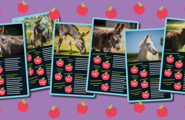 The Adoption Donkey Top Trumps Trail