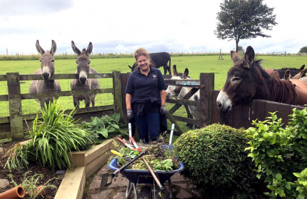 Gardening with donkeys watching over fence
