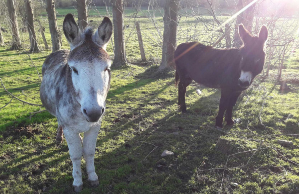 Ned and Jack in their paddock