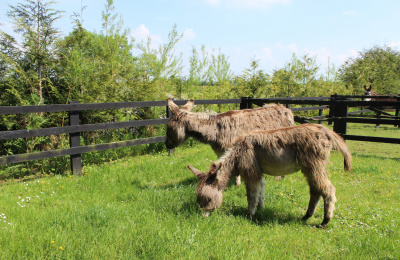 Daphne and Murphy settle in at Donkey Sanctuary Ireland