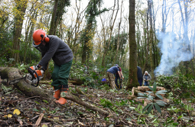 Conservation volunteers working in Paccombe woods