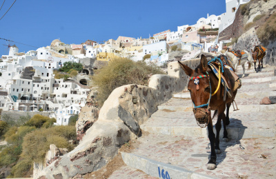 Mule descending Santorini steps
