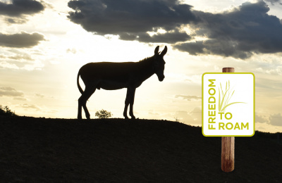 Freedom to Roam donkey in sunset