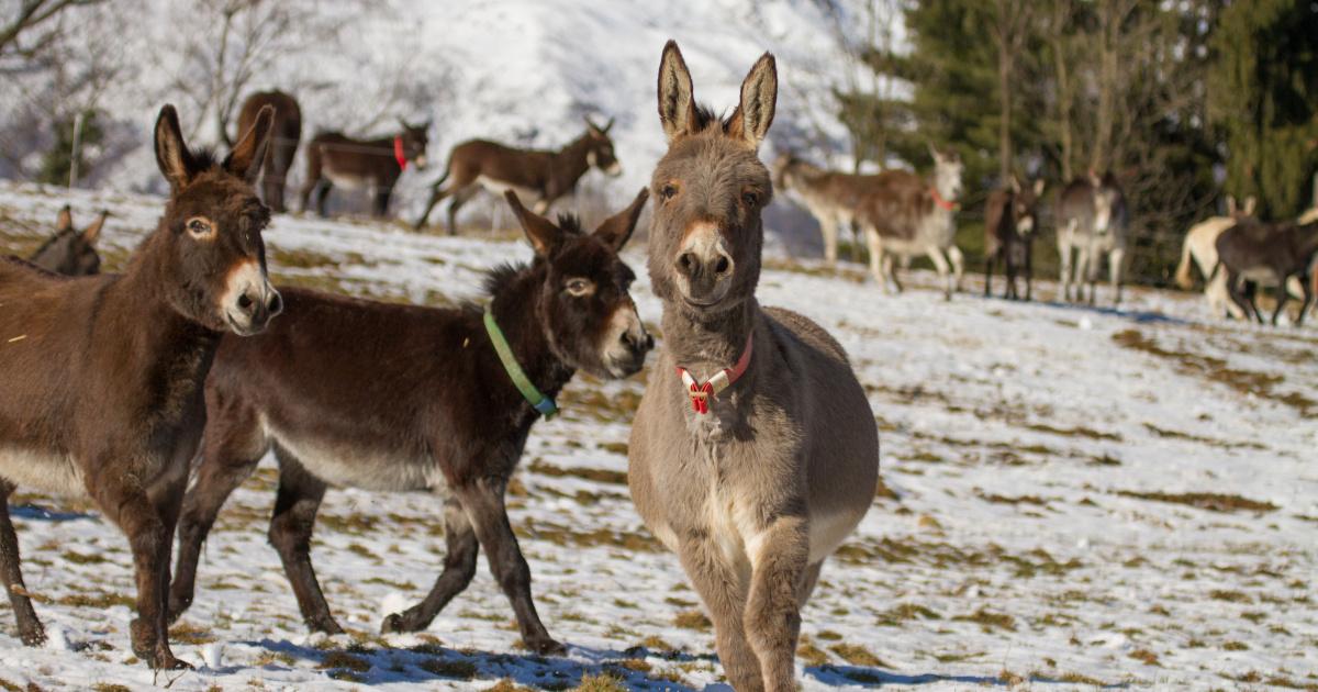 Donkey care in winter | The Donkey Sanctuary
