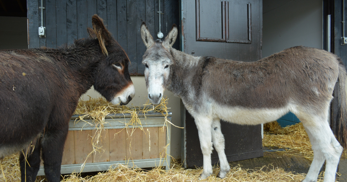 What to feed your donkeys: Nutrition advice | The Donkey Sanctuary