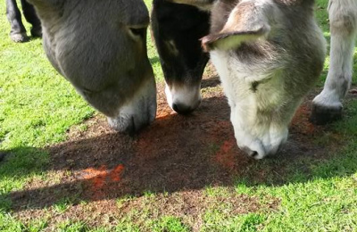 Donkey enrichment - smelling spices