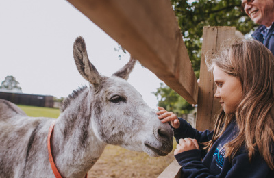 Visiting donkeys in Sidmouth