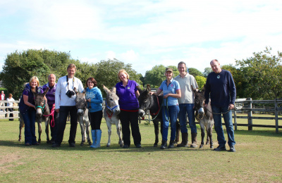 Donkey Experience Day - hands on with donkeys