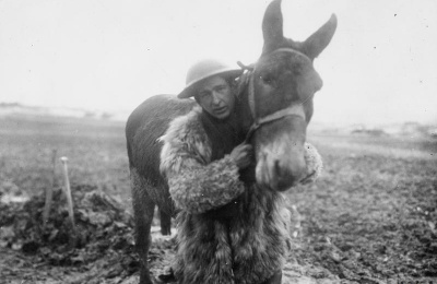 British soldier with mule
